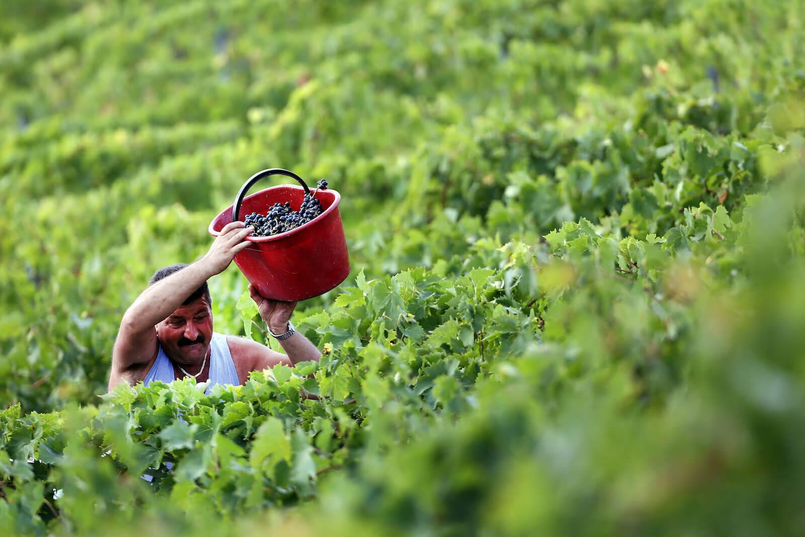 Produttori di vino Sangiovese nel Chianti Classico